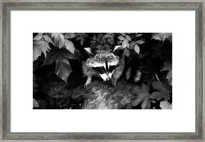 Forest Bandit Framed Print