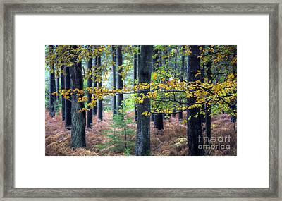 Forest Branch Framed Print by Svetlana Sewell