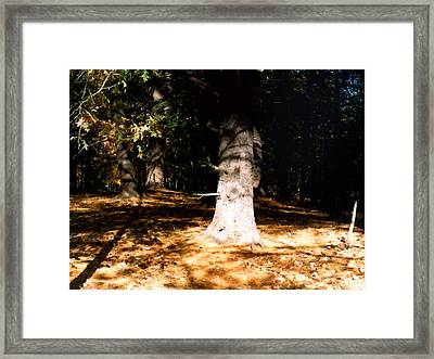 Forest Entrance Framed Print by Paul Sachtleben
