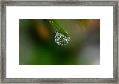 Forest Jewel Framed Print