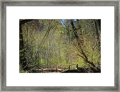 Forest Of Light Framed Print by Ellen Henneke