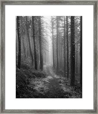 Forest Path Framed Print by Leland D Howard