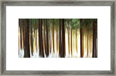 Forest Framed Print by Ralph Klein