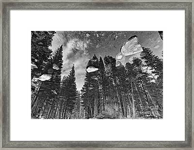 Forest Reflection Framed Print by Jamie Pham