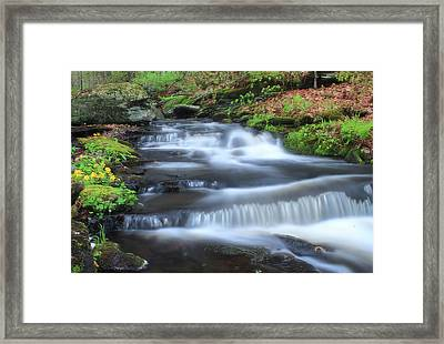 Forest Stream And Marsh Marigolds Framed Print by John Burk