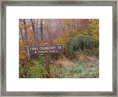 Forks Of Cranberry Trail Framed Print by Thomas R Fletcher