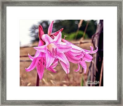 Fort Bragg Pink Naked Ladies Framed Print