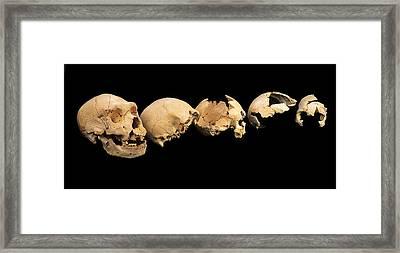 Fossilised Skulls, Sima De Los Huesos Framed Print by Javier Truebamsf