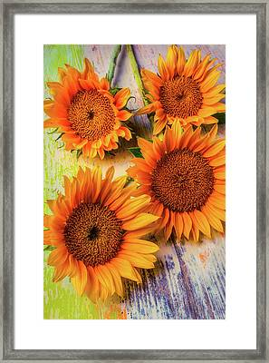 Four Summer Sunflowers Framed Print by Garry Gay