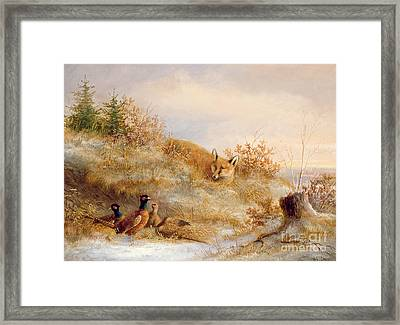 Fox And Pheasants In Winter Framed Print by Anonymous