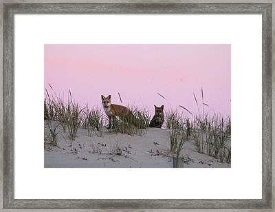 Fox And Vixen Framed Print