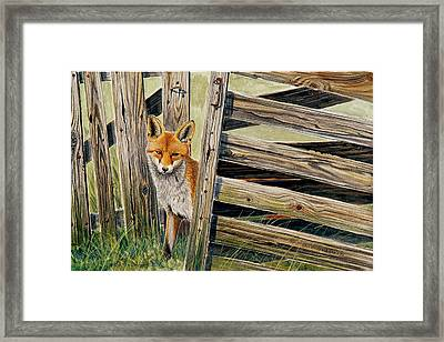 Fox At The Gate Framed Print by Dag Peterson