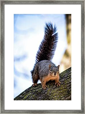Framed Print featuring the photograph Fox Squirrel On Alert by Onyonet  Photo Studios