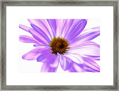 Fragile Memories Framed Print
