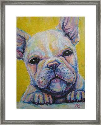 French Bulldog Framed Print by Jack No War