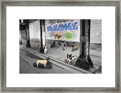 Frenchie Street Gang Framed Print