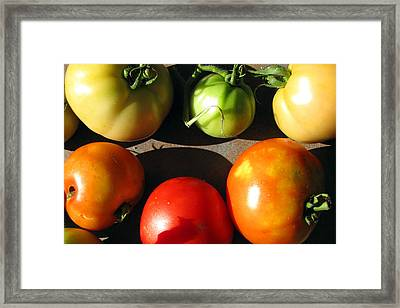 Fresh Tomatoes Framed Print by Amy Tyler