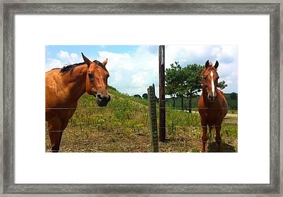 Friendly Stallions Framed Print