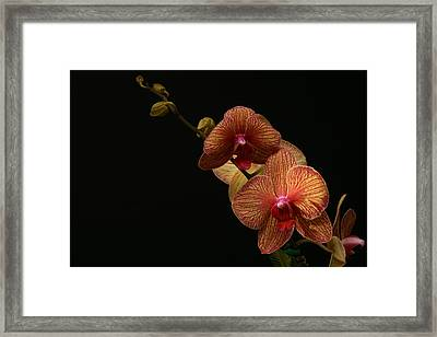 Friendship Framed Print by Doug Norkum