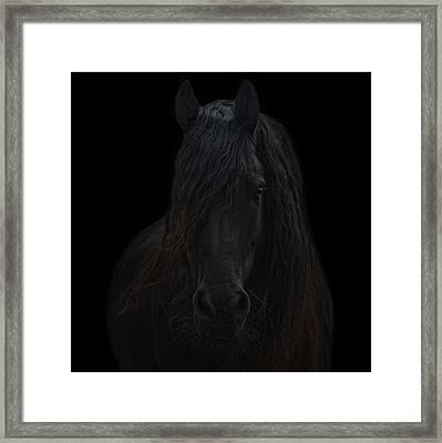 Frisian Stallion Framed Print by Joachim G Pinkawa