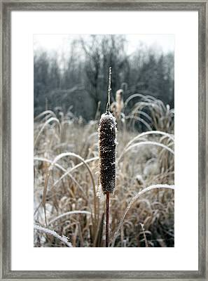 Framed Print featuring the photograph Frosty by Pat Purdy