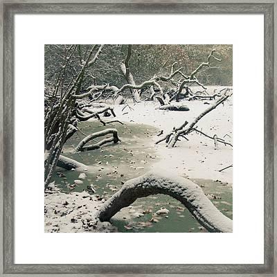 Frozen Fallen Sq Framed Print by Andy Smy
