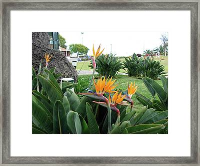Funchal Maderia Framed Print