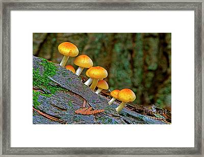 Fungi On A Log Framed Print by Sharon Talson