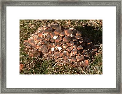 Fungus Framed Print by Chere Lei