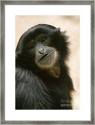Funky Gibbon Framed Print by Andrew  Michael