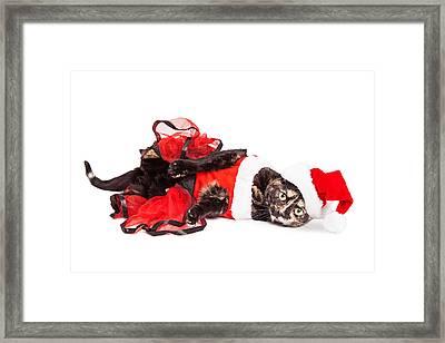 Funny Christmas Santa Cat Laying Framed Print by Susan Schmitz