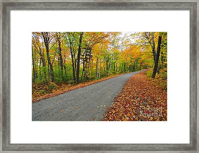 Gale River Road II Framed Print by Catherine Reusch Daley