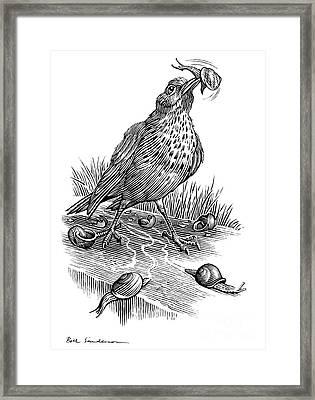 Garden Bird Catching Snails, Artwork Framed Print
