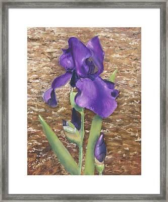 Garden Iris Framed Print