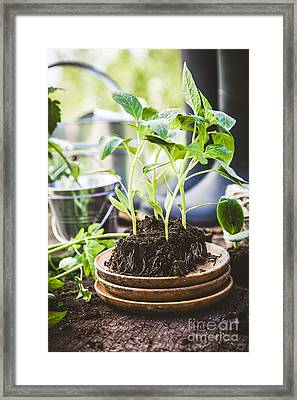 Garden Framed Print by Mythja Photography
