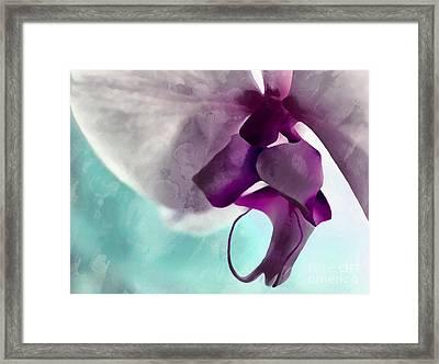 Gentle Beginnings Framed Print