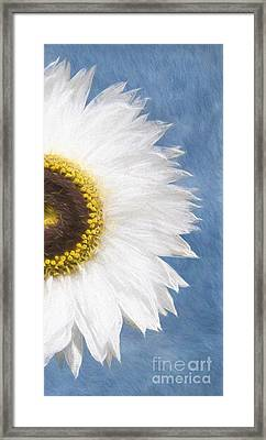 Gerbera Daisey Framed Print by Jim  Hatch