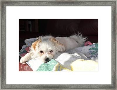 Ginger Daisy Framed Print by Reb Frost
