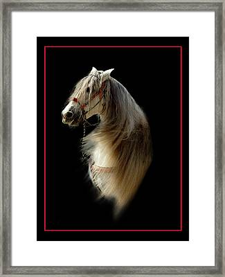 Glamour Shot Framed Print by Richard Gordon