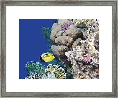 Glorious Red Sea World 3 Framed Print