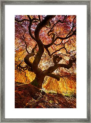 Glowing Canopy Framed Print