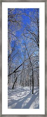Glowing Forest, Knoch Knolls Park, Naperville Il Framed Print