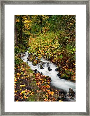 Golden Bend Framed Print by Mike Dawson