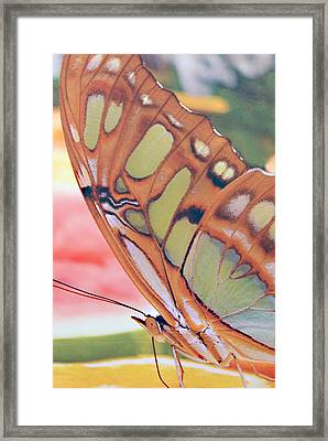 Golden Butterfly Framed Print by Don  Wright
