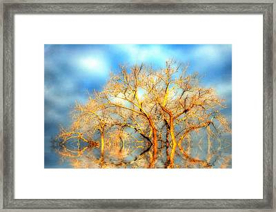 Golden Dawn Framed Print
