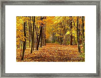 Golden Days Framed Print by Neil Doren