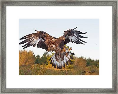 Golden Eagle Framed Print by CR  Courson