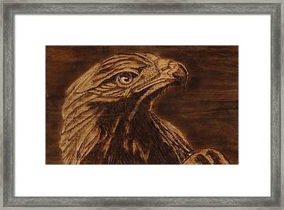 Golden Eagle Framed Print by Jay Johnston