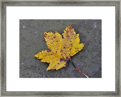 Turn To Golden Framed Print by JAMART Photography
