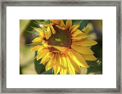 Golden 2 - Framed Print